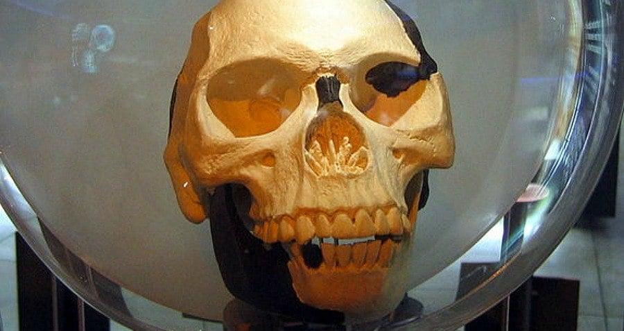 Skull Of The Piltdown Man