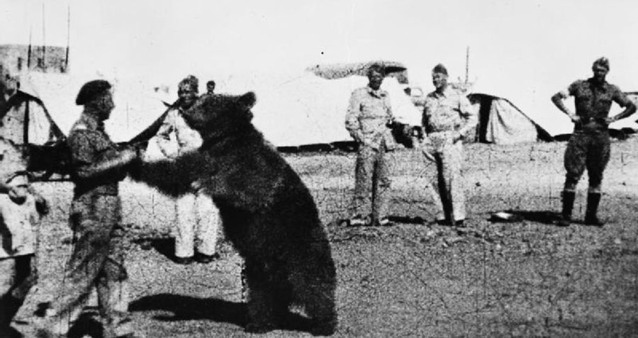 Wojtek The Bear With Troops
