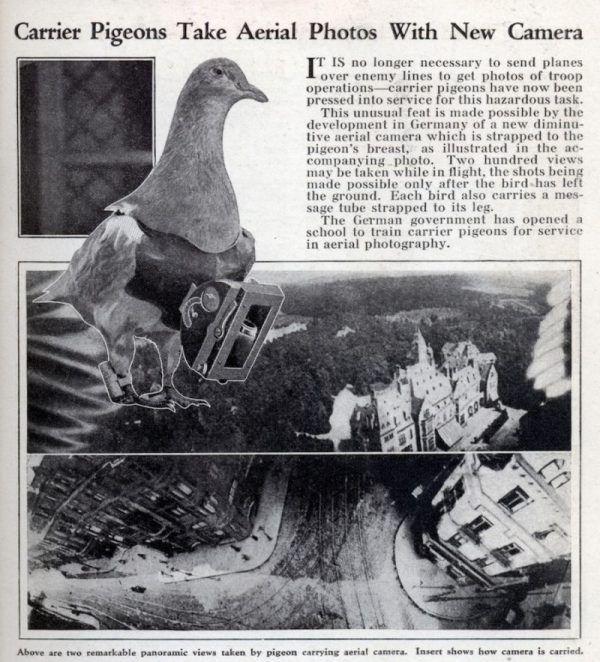 Carrier Pigeons Mechanix