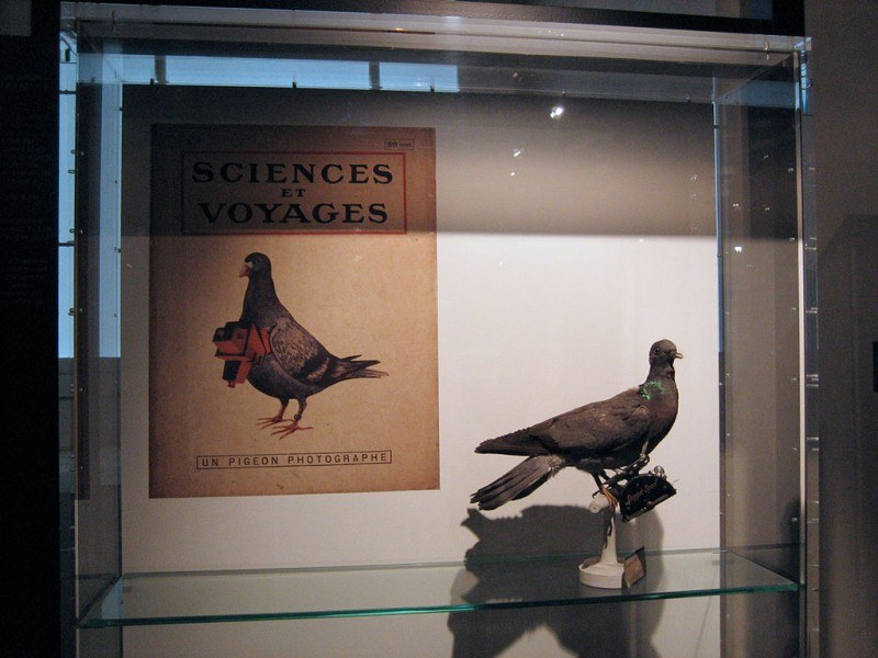 Pigeon Photographer Museum Poster