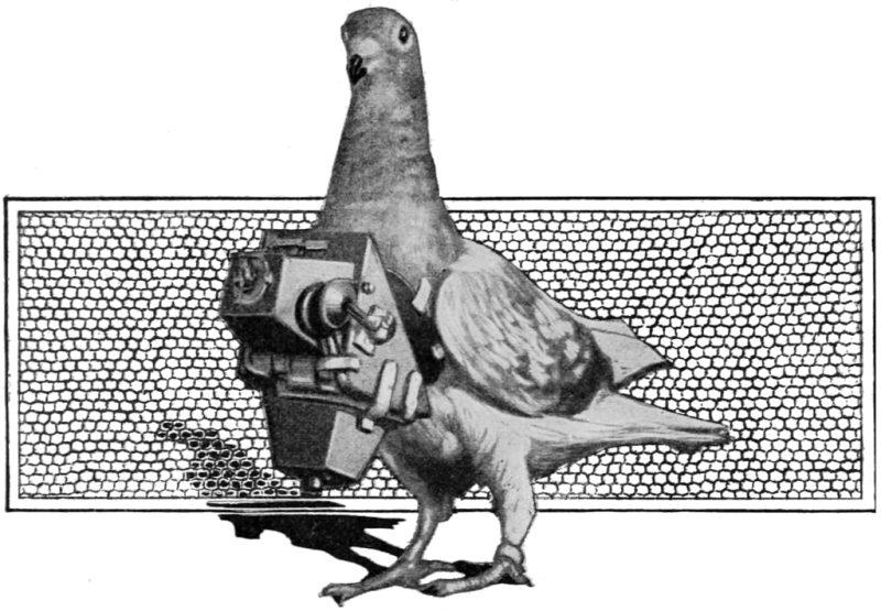 Popular Science Illustration Pigeon