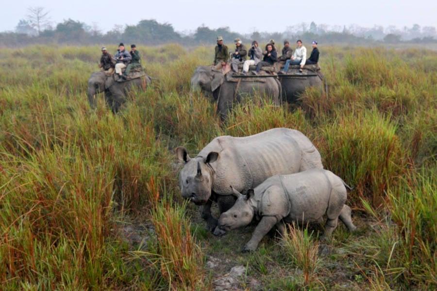 Rhino Tourists