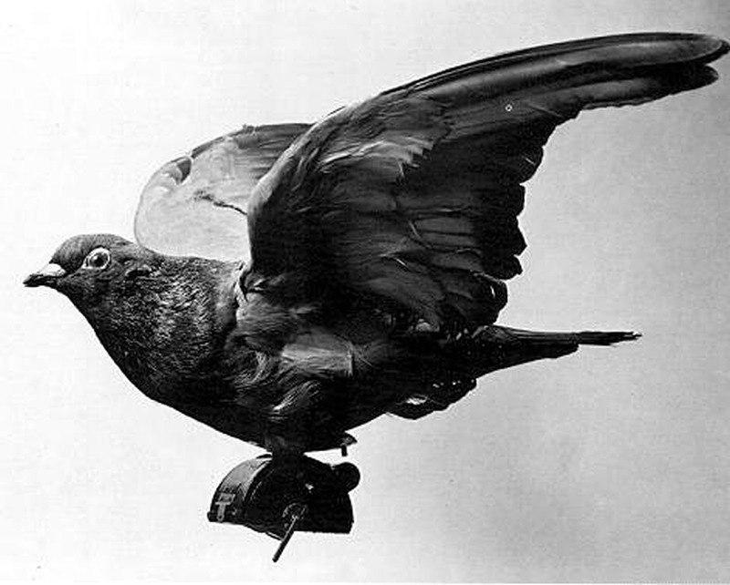 Stuffed Pigeon Flight