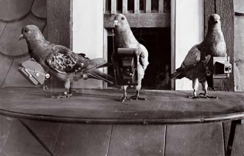 Trio Pigeon Photographers