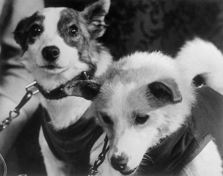 Belka Strelka Space Dogs