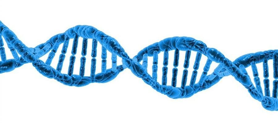 Epigenetics Experiences