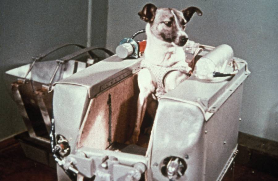 First Animals In Space Canine