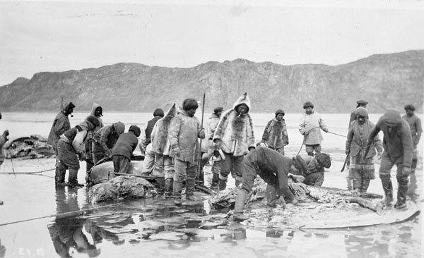 Inuit Beluga Whale Hunt