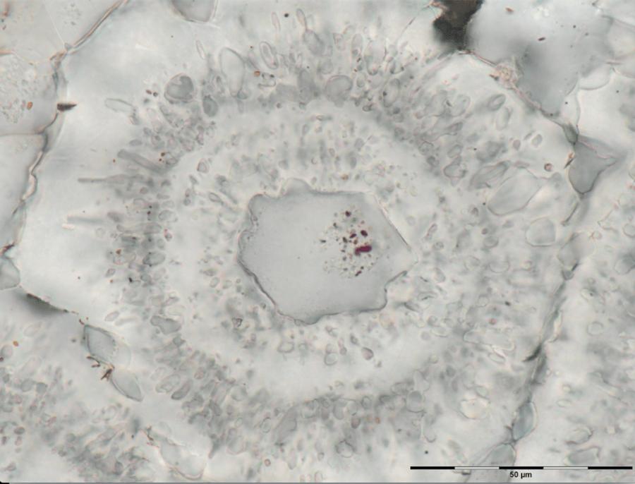 Iron Carbonate