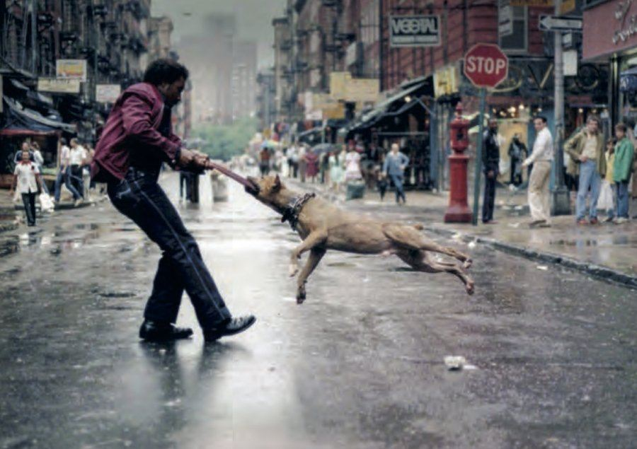 Jamel Shabazz Dog Owner