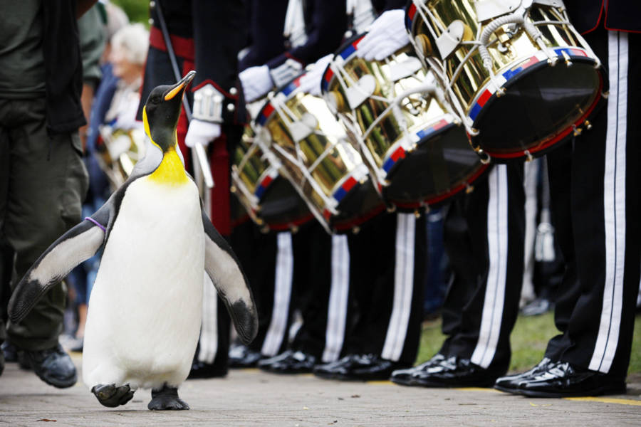 Nils Olav Kings Guard