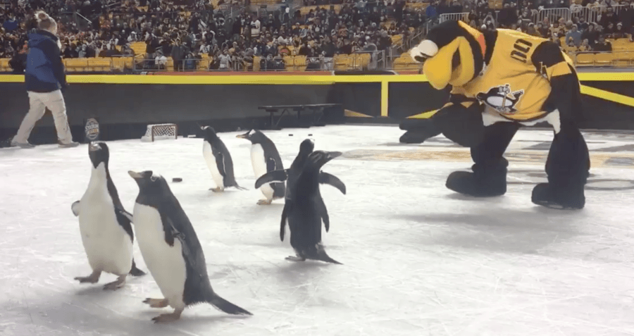 Peta Penguins Hockey