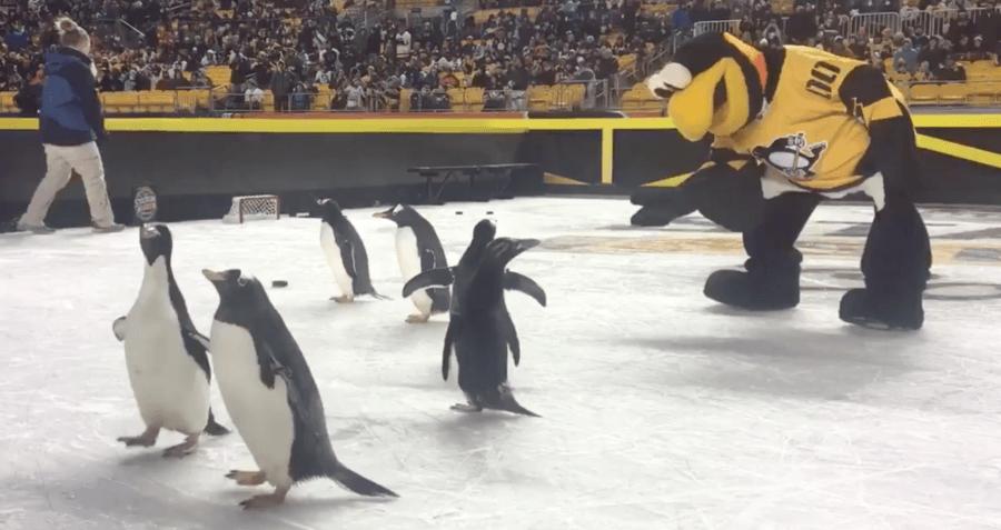 Peta Penguins Hockey