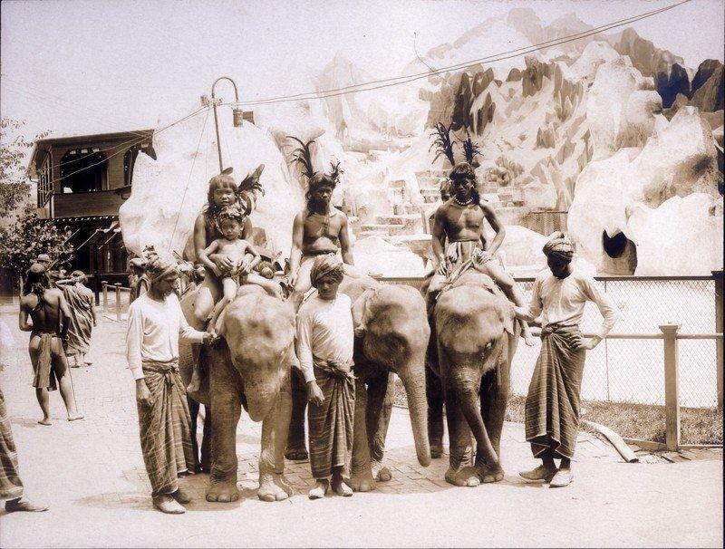Riding Elephants