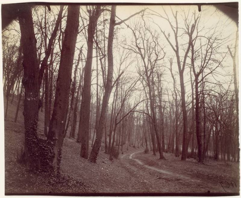 Trees Near Paris