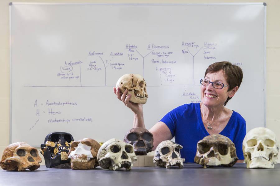Dr Debbie Argue Holds Reconstructed Homo Floresiensis Skull   Credit Stuart Hay   ANU