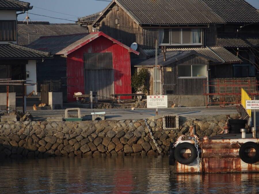 Aoshima Island Japan