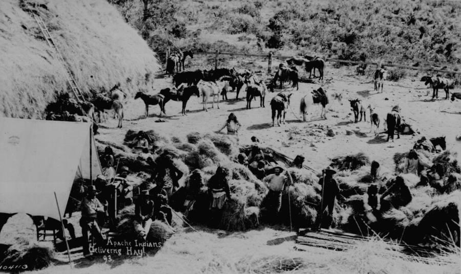 Apache Indians Deliver Hay