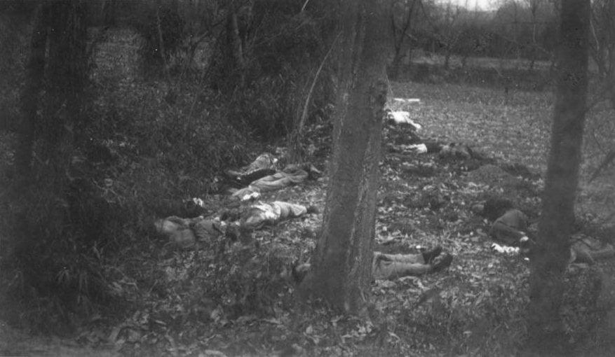 Bodies Trees