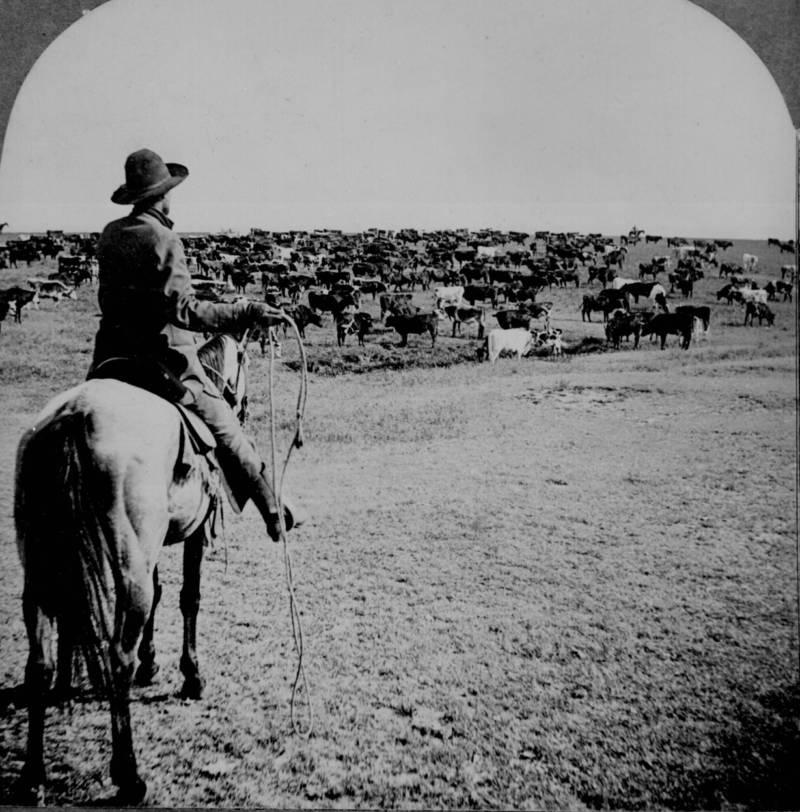 Cowboy Roundup Sherman Ranch