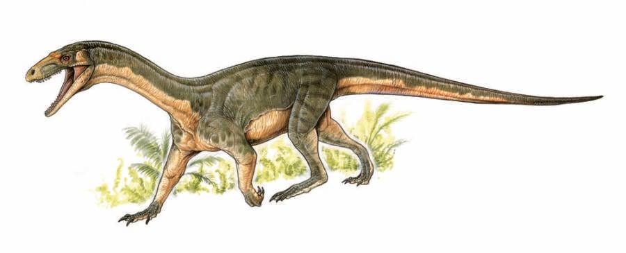 Crocodile Dinosaur Teleocrater Rhadinus