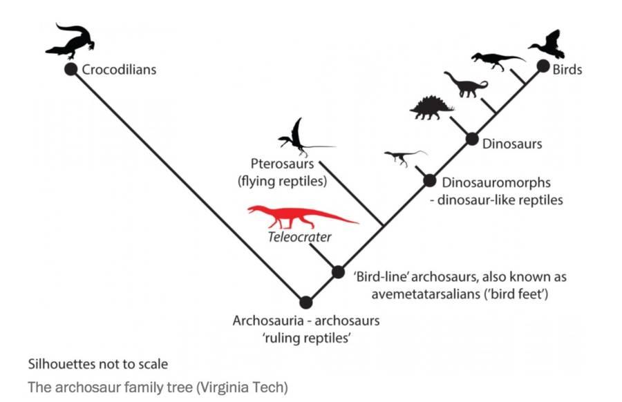 Dino Family Tree