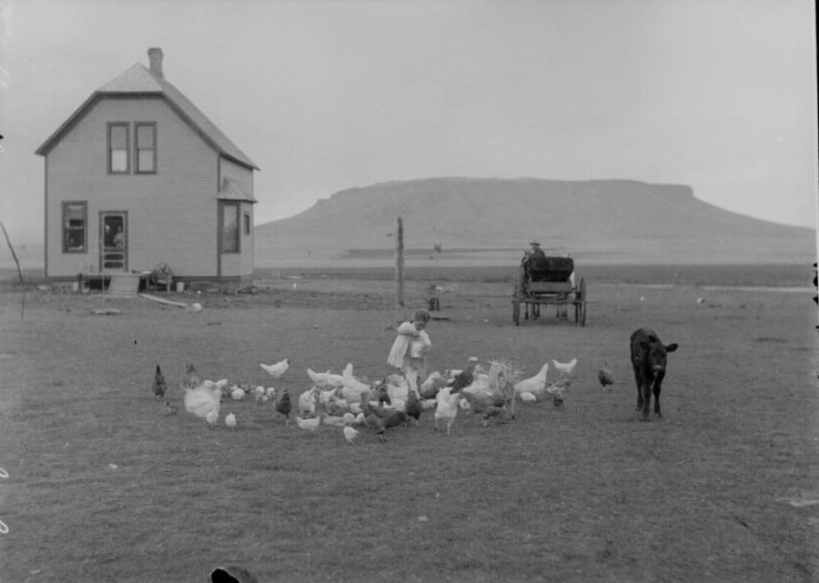 Hanock Homestead Feeding Chickens