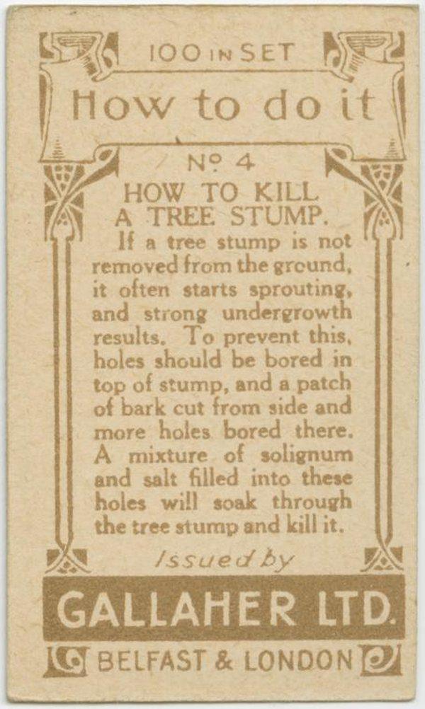 Kill Tree Stump Back