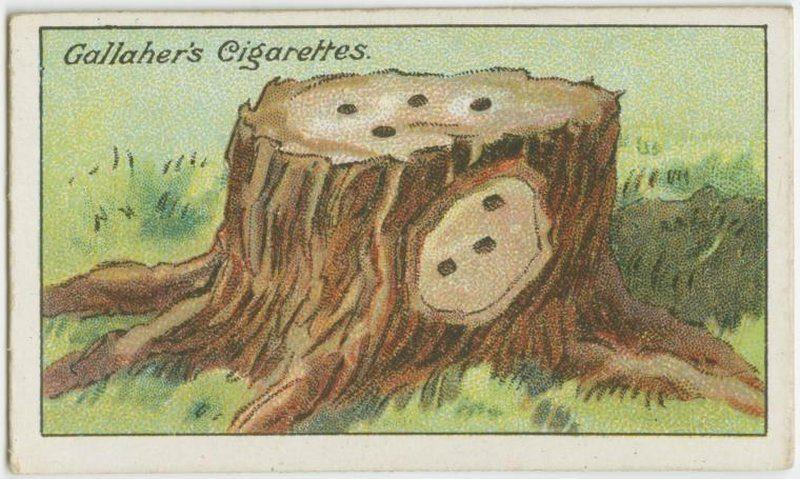 Kill Tree Stump