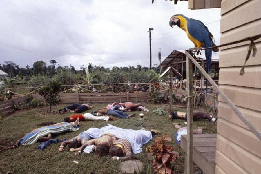 Tragedy Stories Jonestown Parrot