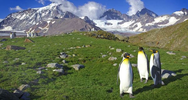 Antarctica is Turning Green at a Shocking Rate, New Report Shows