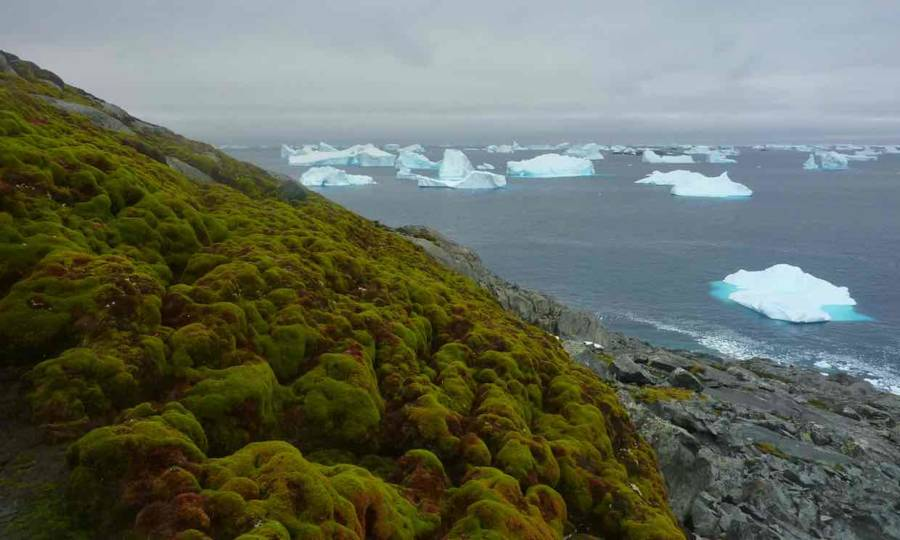 Antarctica Turning Green