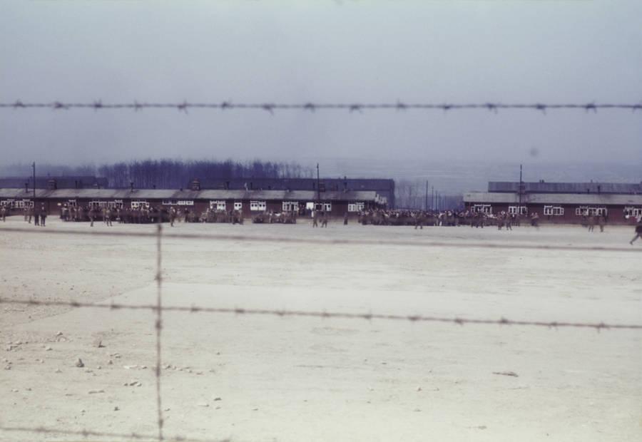 Barbed Wire Buchenwald