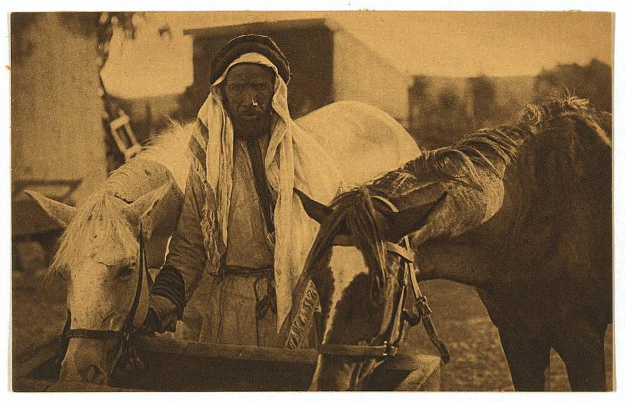 Bedouin Horse
