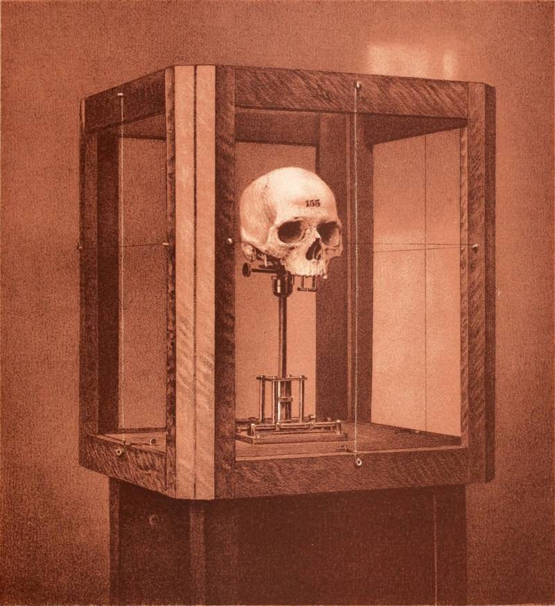 Craniology Skull On Display