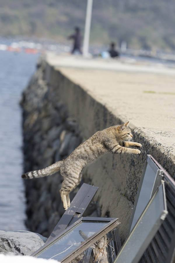 Leaping Cat On Aoshima