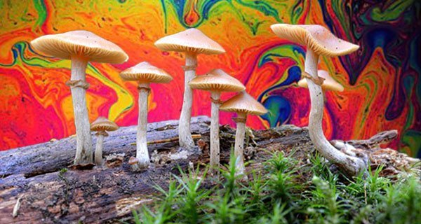 Magic Mushrooms Are The Safest Recreational Drug, New Study Shows