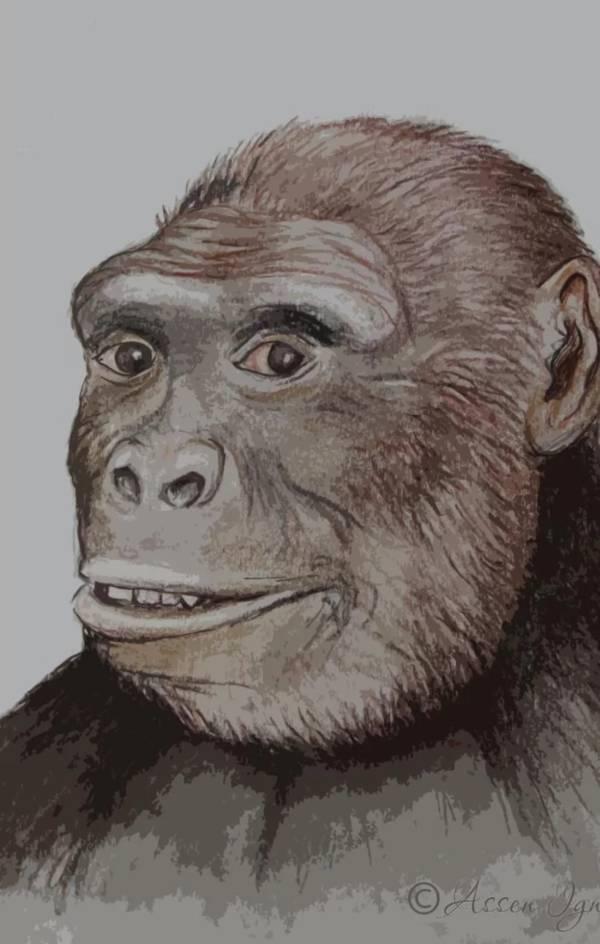 Pre Human Europe