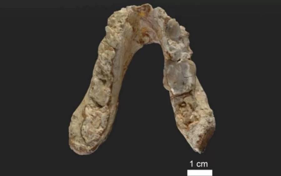 Pre Human Teeth