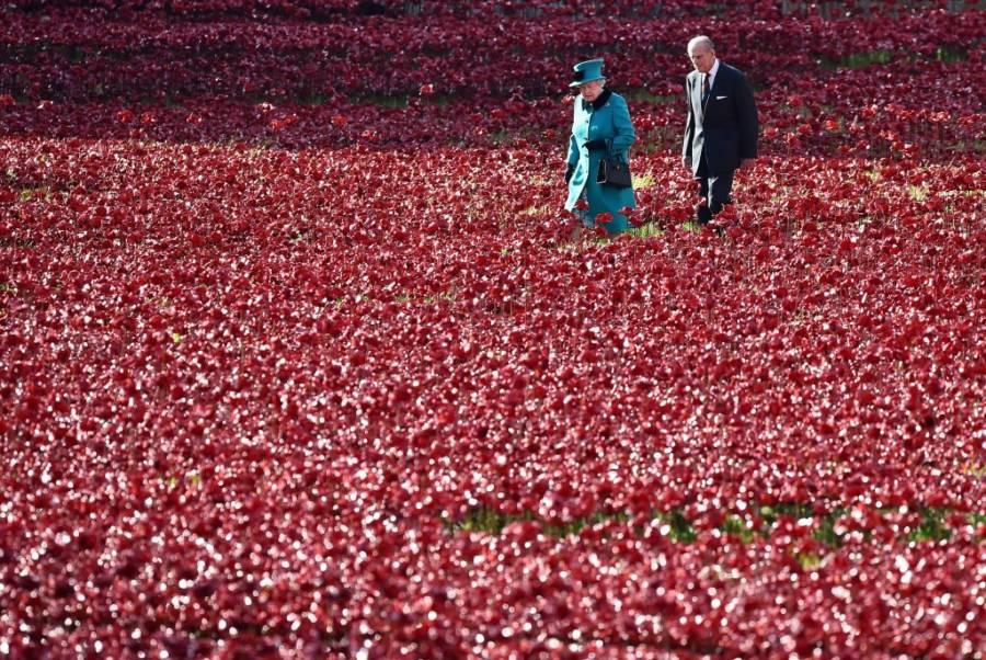 Prince Philip Poppies