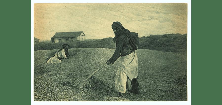Sorting Wheat
