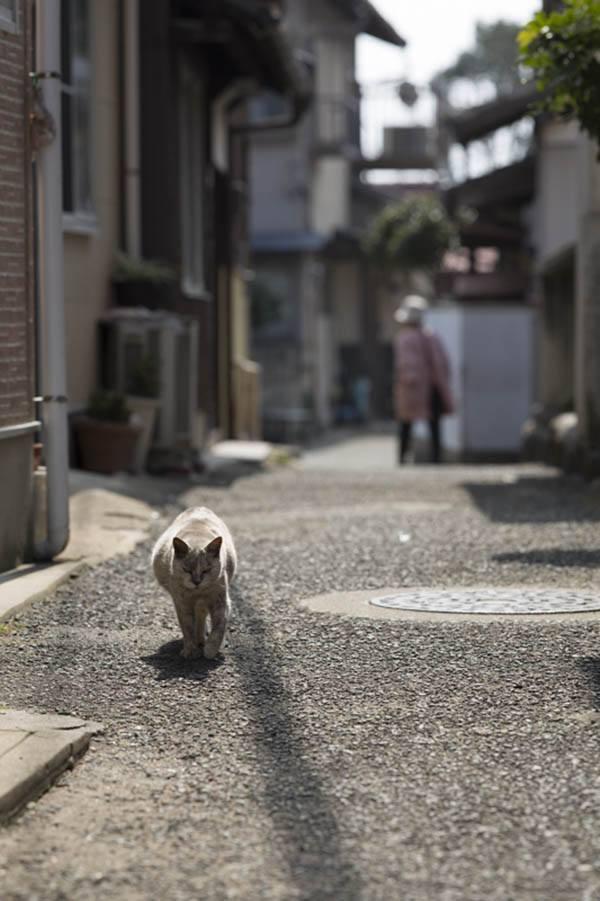 Strolling Cat