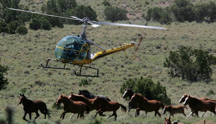 Trump Wild Horse Slaughter