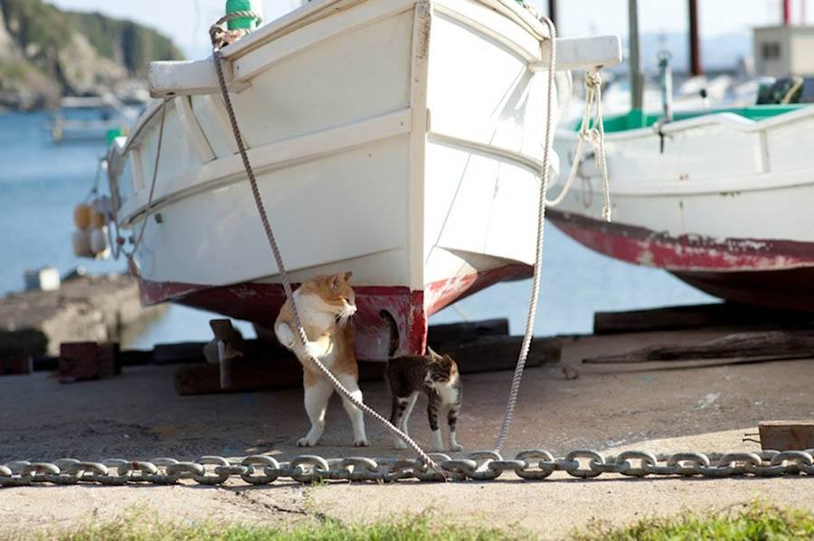 Under Boat