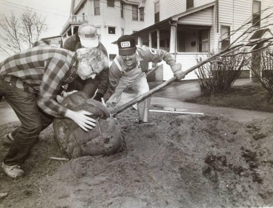 Bernie Sanders Old Photos Tree