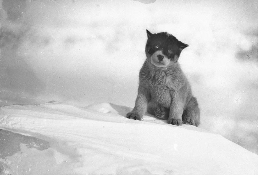Blizzard Puppy Antarctic Exploration