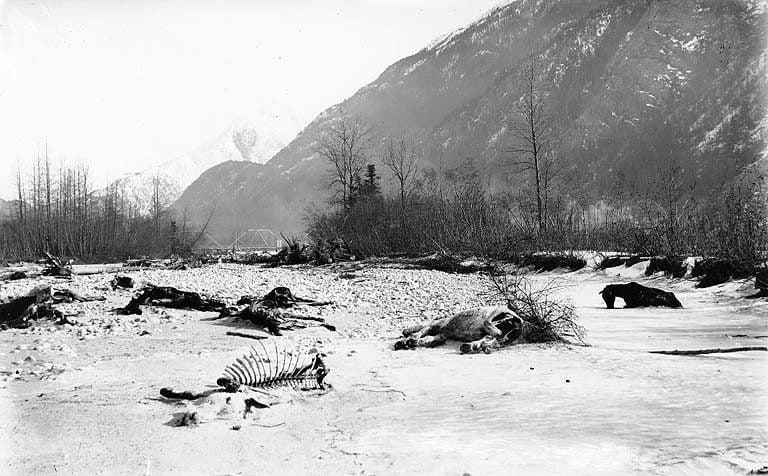 Dead Horse Trail