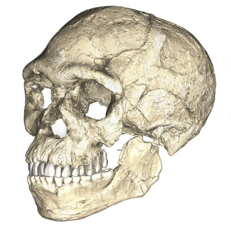 Earliest Human Ancestor Skull
