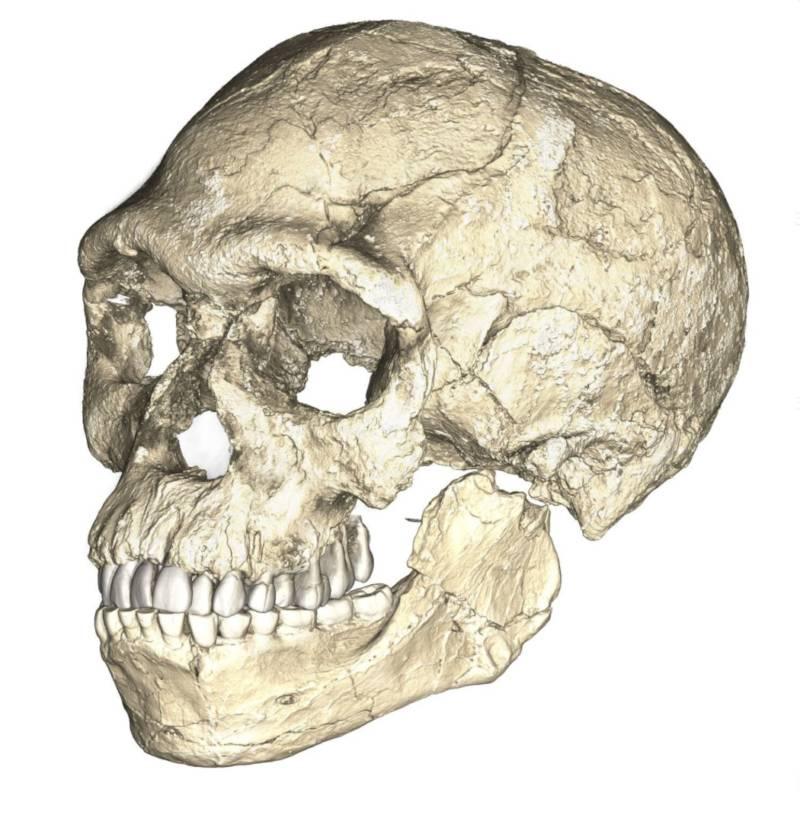 Earliest Human Ancestor Skull