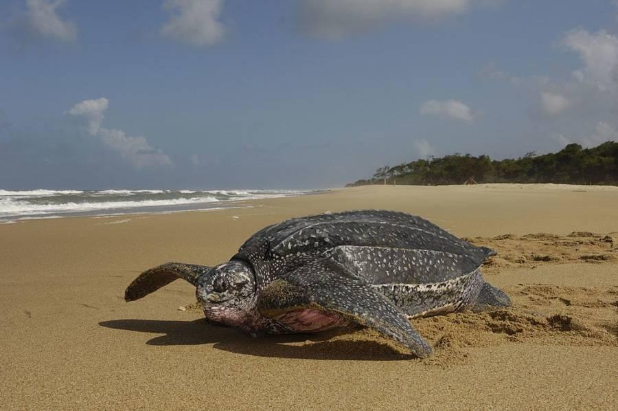 Gabon Ocean Reserve